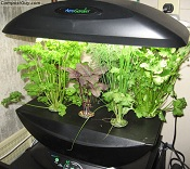 Health Benefits From Growing Your Own Hydroponic Foods At Home